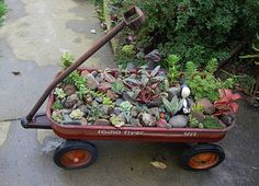 Use your old Radio Flyer wagon as a planter for easy-to-care-for succulents.