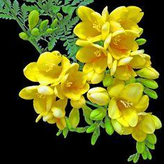 ~~ Beautiful flowers ~~