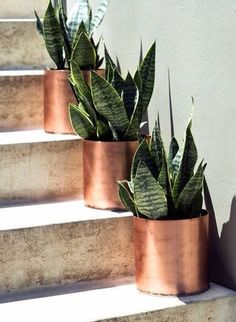 Copper planters for your front steps.