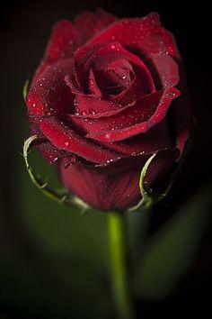 vintage rosas rojas - Buscar con Google