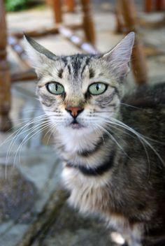 Cat in Samos, Greece.