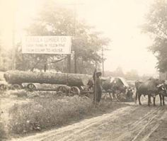 Ox-drawn cart hauling pine logs for the Eufaula Lumber Company. :: Alabama Photographs and Pictures Collection