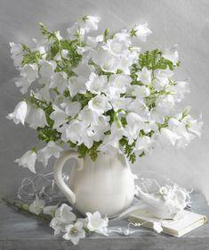 Marianna Lokshina - White bellflowers in jug_LMN19339.jpg