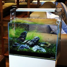 Nature Aquarium - Aquascaping   Planted Aquariums   Aqua Design  