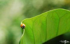 Simplicity, por Parag Thapa