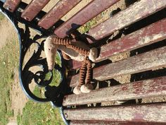 Found at on 06 Aug. 2016 by Liz Perrett : Strange looking soft toy enjoying the sunshine in Victoria Park (just behind The People's Park Tave Park Tavern, Enjoy The Sunshine, Pet Toys, Victoria, London, Outdoor Decor, Animals, Big Ben London, Animaux