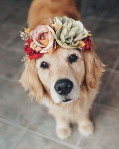 Inspiration for dog flower crown Cute Baby Animals, Funny Animals, Dog Wallpaper, Dog Modeling, Dog Wedding, Wedding Engagement, Dream Wedding, Cute Dogs And Puppies, Doggies