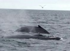 Whale watching trip, Provincetown MA