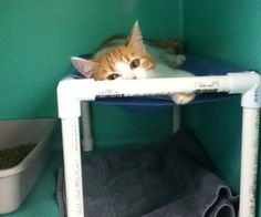 """This small pvc pipe cat hammock frame's finished measurements are: 10"""" tall, 10 ½ wide, 16 ½"""" long.When I starting volunteering at my local animal sh..."""