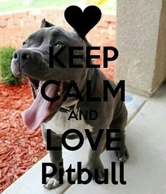 Keep calm and love a pitbull