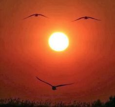 20 Perfectly Timed Breathtaking Pictures | Incredible Pictures
