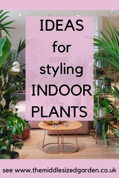 Ideas for styling indoor plants in your living room, bedroom and bathroom and how to have low light houseplants indoorplants indoorgardening houseplants middlesizedgarden bathroomplants 771804454875900549 Living Room Plants, House Plants Decor, Plant Decor, Living Rooms, Indoor Plant Pots, Best Indoor Plants, Bathroom Plants, Hanging Plants, Container Gardening