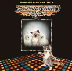 The Sqee Gees - Caturday Night Fever