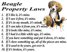 BEAGLE FUNNY PROPERTY LAWS -