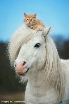 What kitten? Where?
