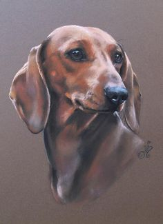The Diverse Dachshund Breed - Champion Dogs Dachshund Breed, Arte Dachshund, Dachshund Love, Daschund, I Love Dogs, Cute Dogs, Most Popular Dog Breeds, Weenie Dogs, Doggies