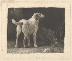 George Stubbs (British, 1724–1806). Dog (A Foxhound Viewed from Behind), May 1, 1788. The Metropolitan Museum of Art, New York. The Elisha Whittelsey Collection, The Elisha Whittelsey Fund, 1949 (49.49.6)