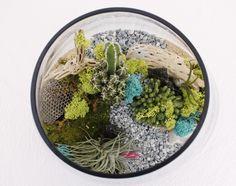 Cactus Succulent Garden Terrarium