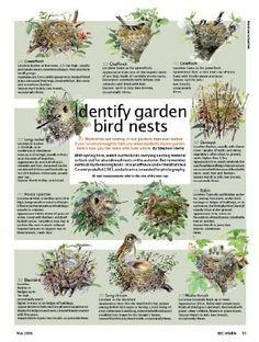 This guide is very handy for getting to know what birds your have in your garden. You can tailor the food your feeding to help their species thrive. Find our Bird Feeding guide at www.seedtofeed.co.uk © BBC Wildlife. Identify garden bird nests.