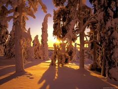 Winter forest view desktop PC and Mac wallpaper Snowfall Wallpaper, View Wallpaper, Sunset Wallpaper, Nature Wallpaper, Forest Wallpaper, Winter Schnee, Forest View, Snow Forest, Forest Sunset