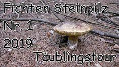 Fichten Steinpilz Nr.1 2019 und Täublingstour - Pilze Ende Juni