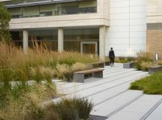 Smith Cardiovascular Research Building | University of California San Francisco | Andrea Cochran Landscape Architecture