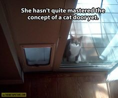 Challenging cat door...poor kitty