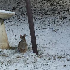 #rabbit #cottontail visitor to my bird feeder. by logcabinannie