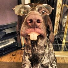 """At least, life is a lot more cheery around German Shorthaired Pointers and due to their """"achievements""""! See why at <a mce_thref=""""http://boredomkicker.com"""" rel=""""nofollow"""" target=""""_blank"""">boredomkicker.com</a>"""