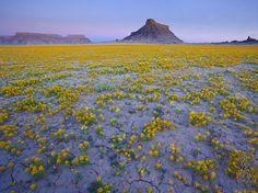 Les déserts de la région des Badlands dans l'Utah sont un des endroits les plus arides de la planète, mais de temps en temps, au printemps, quand les conditions sont idéales, les graines de fleurs colorées enfouies dans la terre germent et fleurissent, recouvrant le sol de superbes couleurs.