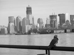 Pigeon and lower Manhattan from Jersey City, NJ