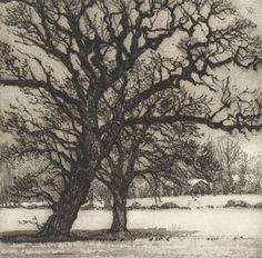 Winter Oaks, Chrissy Norman, etching
