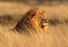 I want to see the animals in the wild, feel the heat and watch the sun rise and set on the horizon!