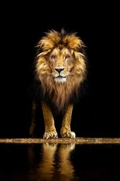 Lion in the Dark - 70x100cm