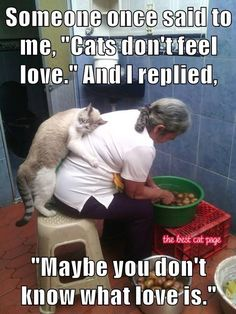 TheBestCatPage Source by Muesliesser videos wallpaper cat cat memes cat videos cat memes cat quotes cats cats pictures cats videos Cool Cats, I Love Cats, Hate Cats, Funny Cats, Funny Animals, Cute Animals, Crazy Cat Lady, Crazy Cats, Gatos Cool