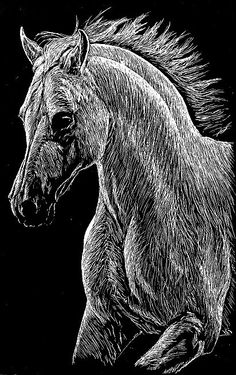 Image detail for -Horse Scratch