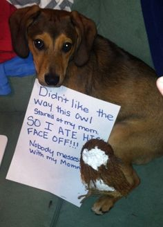 """I didn't like way this owl was stared at my Mom. SO I ATE HIS FACE OFF!!! Nobody messes with my Mommy!"" ~ Dog Shaming shame - 100 Best Dog Shaming Moments photo Eavie Porter's photos"