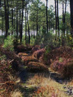 Chemin en forêt, Pissos, Landes, Aquitaine, France.