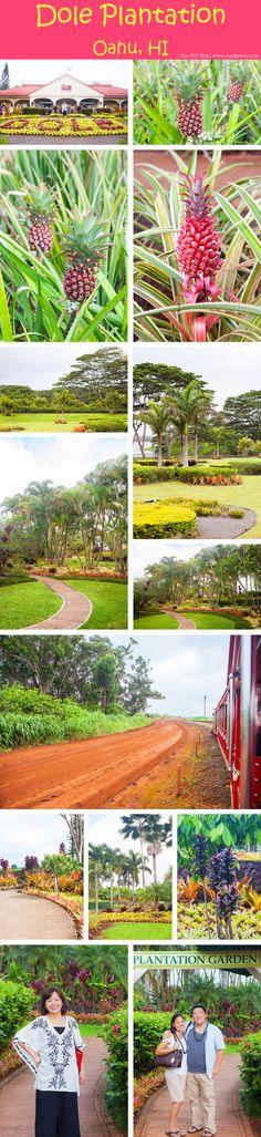 The PKP Way   A Weekend in Oahu, Hawaii   Dole Plantation http://www.thepkpway.com