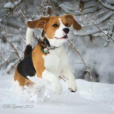 Louie having fun in the snow