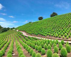 日本の魅力再発見! 行って良かった国内の旅先10選 Japanese Landscape, Vineyard, Scenery, Healing, Nature, Travel, Outdoor, Beautiful, Outdoors