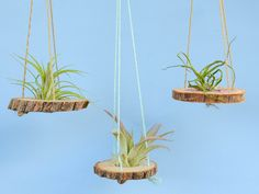 Hanging Wood Slice Air Plant Holder - Custom Color String - Hanging Air Planter, Wood Decor by PineDistrict on Etsy https://www.etsy.com/listing/501120159/hanging-wood-slice-air-plant-holder