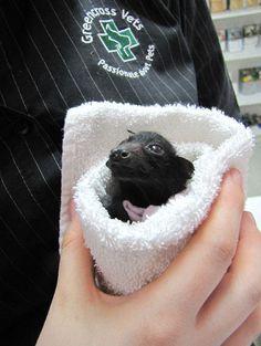 baby bat!