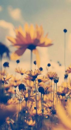 30 ideas for sunflower wallpaper vintage iphone Wallpaper Free, Wallpaper For Your Phone, Nature Wallpaper, Simple Iphone Wallpaper, Spring Wallpaper, Wallpaper Ideas, Yellow Flower Wallpaper, Sunflower Wallpaper, Flower Backgrounds