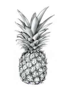 images for pineapple graphic design pineapples pinterest