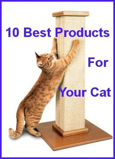 10+  Best Products For Your Cat ... Sold On Amazon ... see more at PetsLady.com ... The FUN site for Animal Lovers