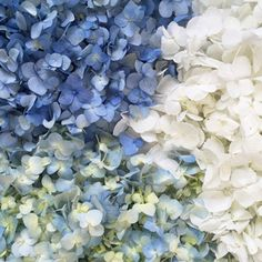 This classic mix of white, antique blue and something blue fresh hydrangea petals will add a dash of elegance to your wedding décor! Charm your guests by sprinkling these whimsical little petals around your table centerpieces, or have your flower girl playfully toss them down the aisle. Offered in three package options, these are handled carefully at the farm before being shipped directly to you.