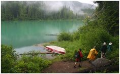 Rain forest !, a photo from British Columbia, Western | TrekEarth