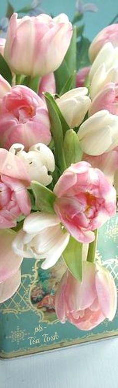 Pretty Tulips ✴ Téa Tosh