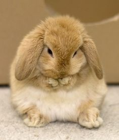 Ew dude, I can hear you laughing at me! I'M RIGHT HERE I CAN HEAR YOU   Community Post: 15 Bunnies That Think They Are SO SPECIAL